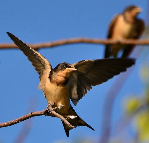 Showing off bird