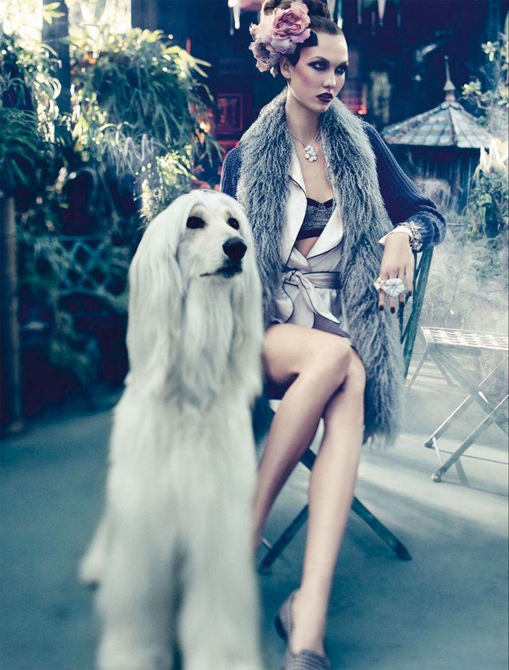 Vogue Germany #dog #fashion #pets