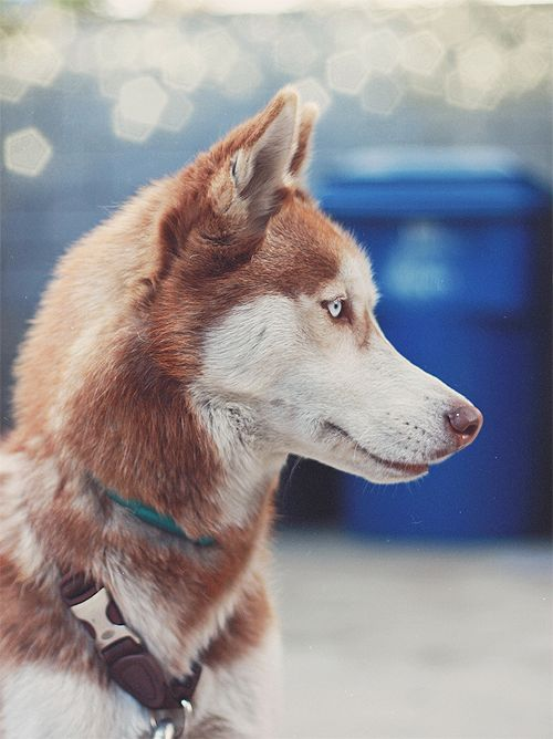 ps3 skyrim how to call dog