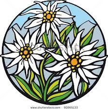 edelweiss coloring page - Google Search