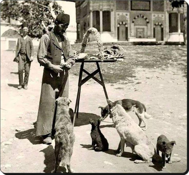 Simitlerini sokak köpekleri ile paylaşan simitçi Sultanahmet - 1880'ler
