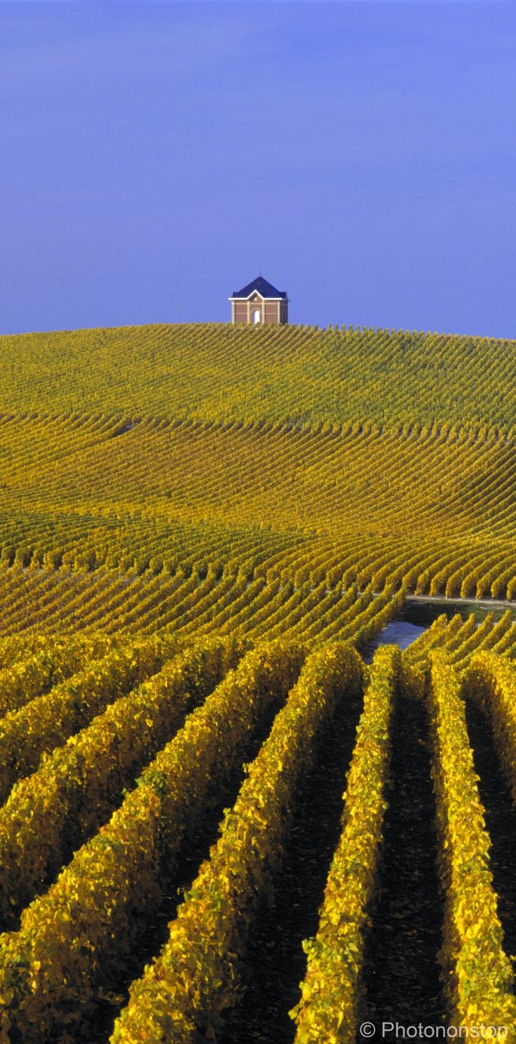 Vignobles de Moet et Chandon - Champagne Ardenne, France.