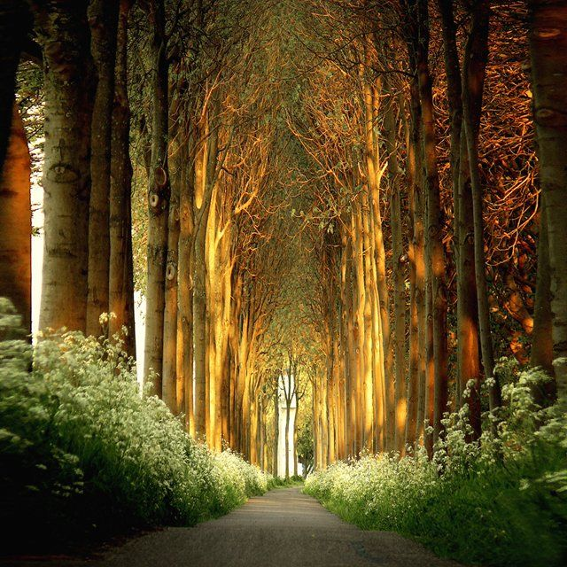 Amsterdamse Bos Park, NetherlandsPaths, Trees Tunnel, Church, Nature, Beautiful, Fairy Tales, Belgium, Places, Tree Tunnel