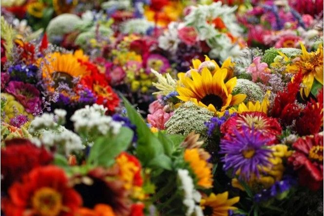 Λουλούδια θεραπεύουν ασθένειες