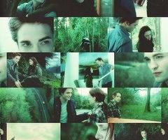 Forks <3 Twilight saga