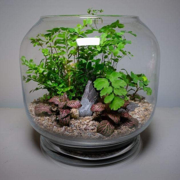 Glass Bowl Terrarium Plants, Large Glass Terrarium Jars