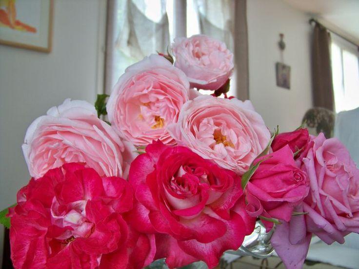 Roses, passionnément