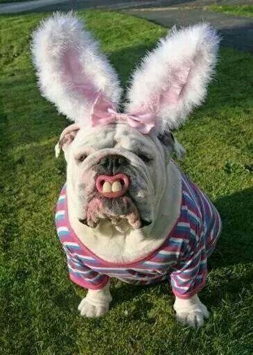 Vrolijk Pasen. ~ OMG! LMFAO!! ~