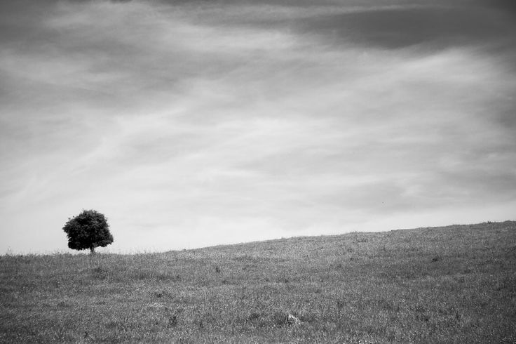 https://flic.kr/p/tTXiTM | Dehesa - Extremeña | La dehesa extremeña, zona de cría de ganado, se caracteriza por su gran extension y su simpleza en la parte mas al sur y que va cogiendo poco a poco forma montañosa mas al norte de la provincia...