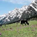 Visit Gangtok Lachen & Lachung with 7 Days Tour Package - http://www.nitworldwideholidays.com/north-east-india-package-tours/gangtok-lachen-lachung-tour.html