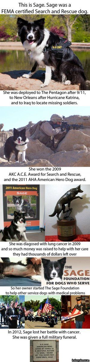 Sage - search and rescue dog. RIP