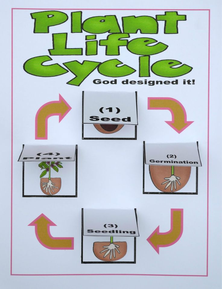you can print the lift the flap plant life cycle chart to print projects to try pinterest. Black Bedroom Furniture Sets. Home Design Ideas