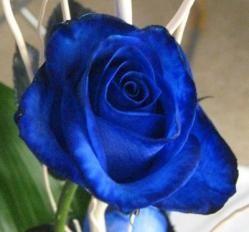 Las rosas azules: significa confianza, reserva, armonía y afecto.