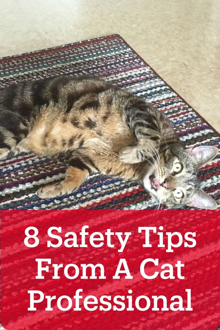 8 Safe Cat Toys And How To Use Them The Right Way Caticles In 2020 Cats Cat Toys Cat Mom