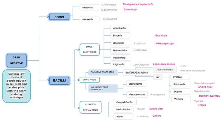 Classification of Gram Negative Bacteria