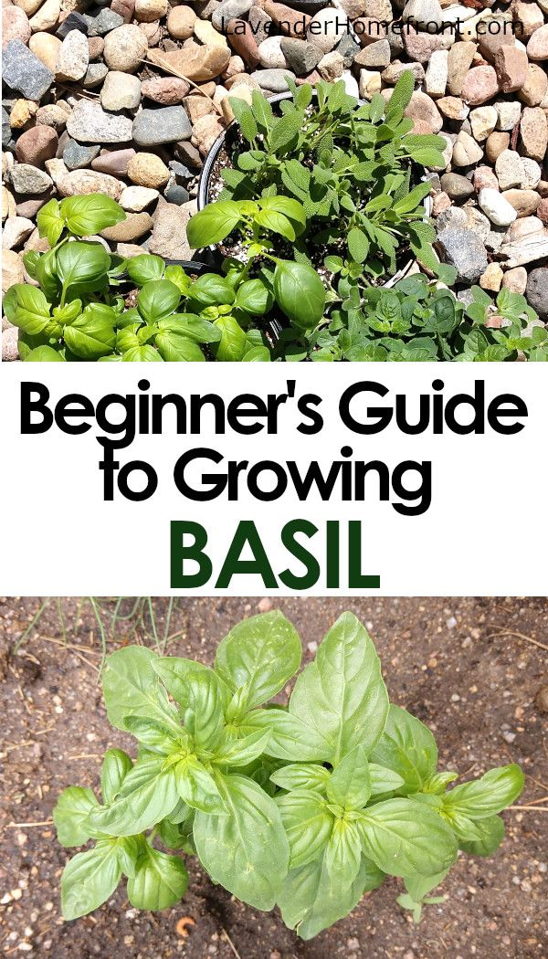 bd6e7430ae9080c78ab49eaf4cda9e56 - Companion Planting The Beginner's Guide To Companion Gardening
