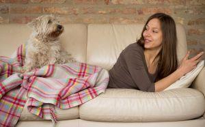 Westie auf dem Sofa: Durfte der Westie als Welpe auf das Sofa so wird man ihm das als erwachsener Westie kaum verbieten können! Von der ersten Nacht an lassen Sie den Westie dort schlafen, wo sein Schlafplatz auch in Zukunft sein soll. Der Welpe wird weinen, falls Sie ihn nachts alleine lassen (z. B. wenn das Körbchen im Wohnzimmer steht). Also nächtigen Sie die erste Zeit auf dem Sofa in seiner Nähe.