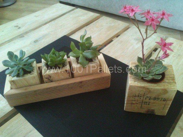 Small succulents planters petite d corations de table for Petite table deco