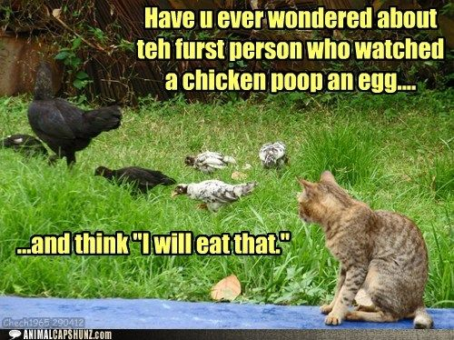 Funny Chicken Jokes: 76 Best Chicken Jokes & Humor Images On Pinterest
