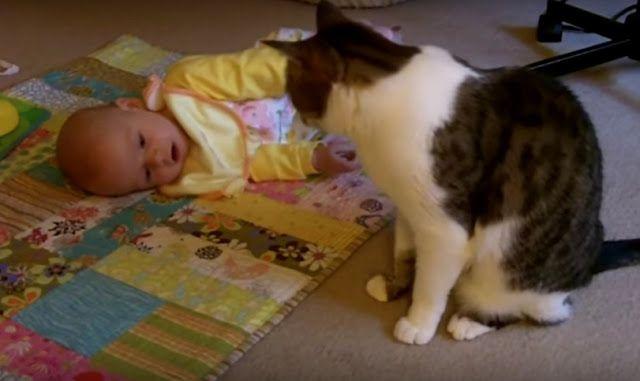 Мама положила своего малыша на пол...Поведение кошки сложно объяснить!