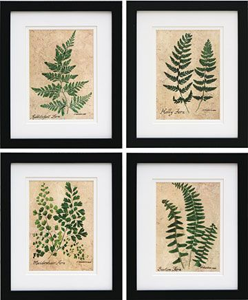 Framed Fern Prints Pressed Fern Prints Prints And