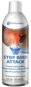 WSPRAY Stop Bird Attack eliminates the bird's window reflection, calms the bird, and stops the attack. The product is a removable, white coating that may be sprayed on any window under attack. Stop Bird Attack is effective for Northern Cardinals, American Robins, and other territorial birds.