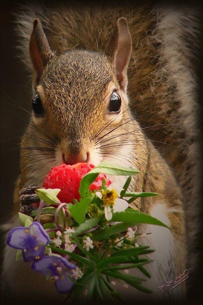 картинка животное с цветком