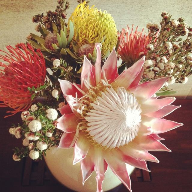Native Australian Flowers.