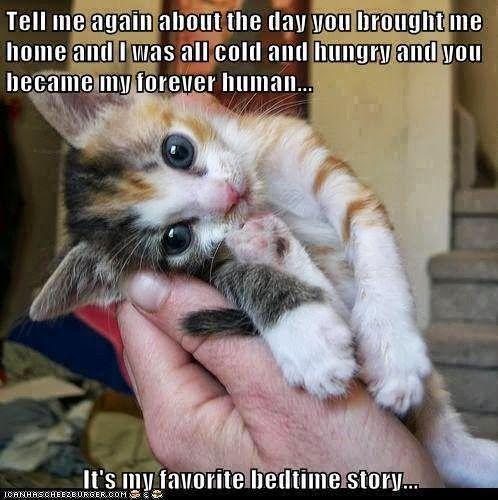 from a rescued kitten Bd700a08beaab6b17ec6ef2bf4f25183