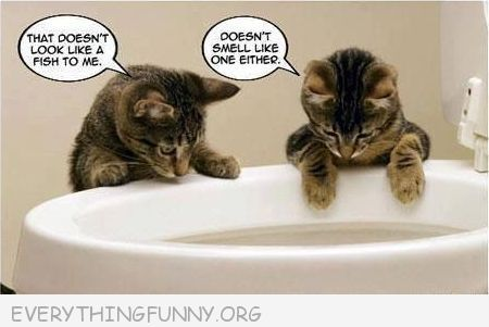Pin by cindy fromm on fun things pinterest toilets for Why does my dog smell like fish
