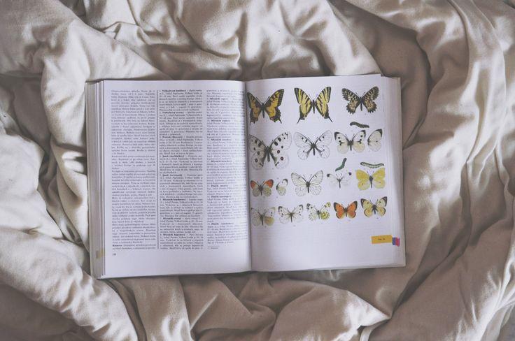 nature, butterflies, book, bed