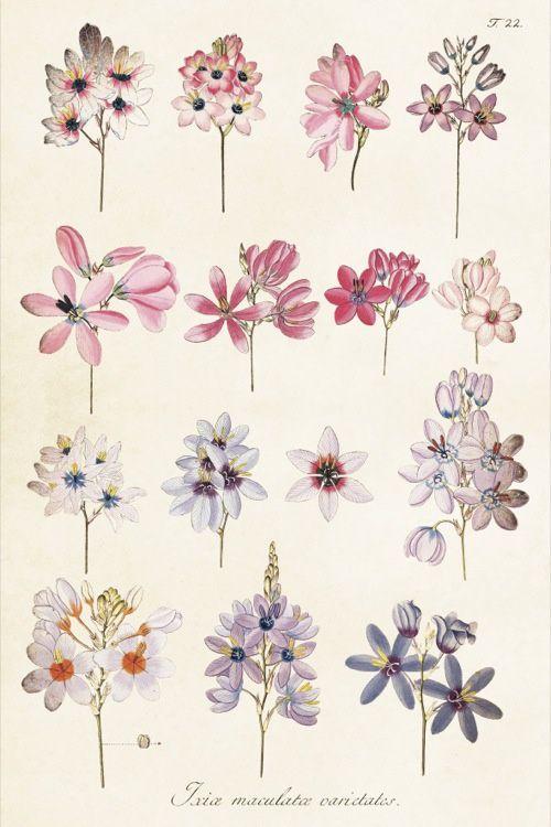 Vintage Flowers 'Kaart Ixia'