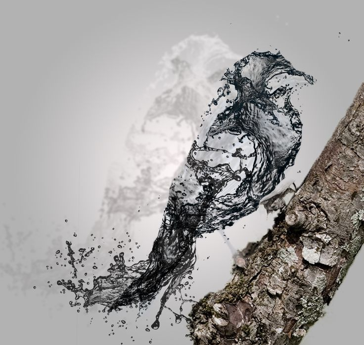 Photoshop - water effect - bird - AtB https://www.facebook.com/pages/AstridtenBosch-Art/562052023904627