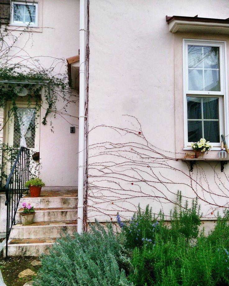 """""""今日はさむーい。。 お庭のローズマリーのお花が咲いてます♪かわいいな♪ * #おうち#家#マイホーム#サラズ #ガーデン#ナチュラルガーデン#ローズマリー #玄関アプローチ #暮らし #home#house#mygarden#naturalgarden#rosemarie"""""""