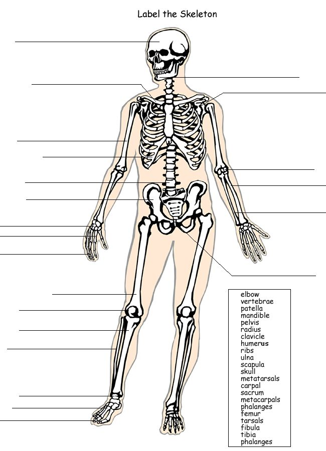 Human Skeleton To Label Cultuafo