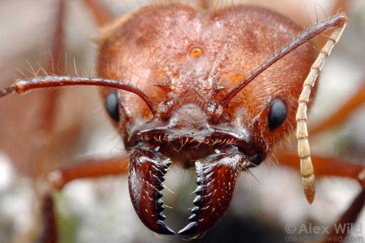 how to get rid of cicadas underground
