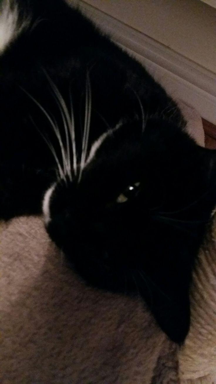 # winking!  When I randomly took a pic of my cat it suddenly winked lol!!!