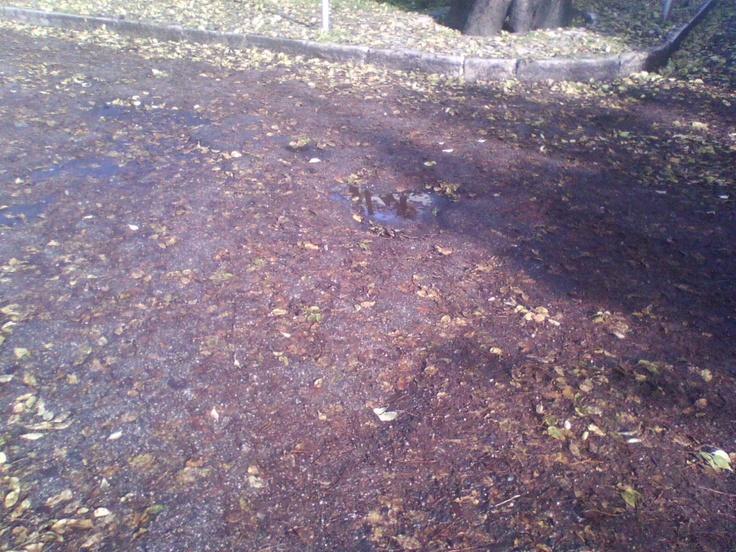 Um mar de folhas tombadas