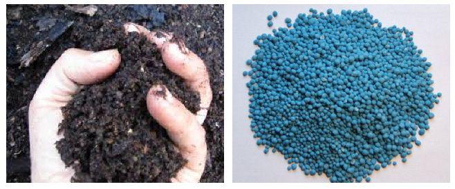 Kompos vs Pupuk Kimia