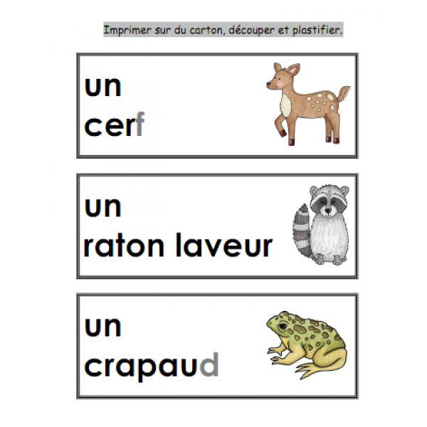 Dans la forêt mathématique et français