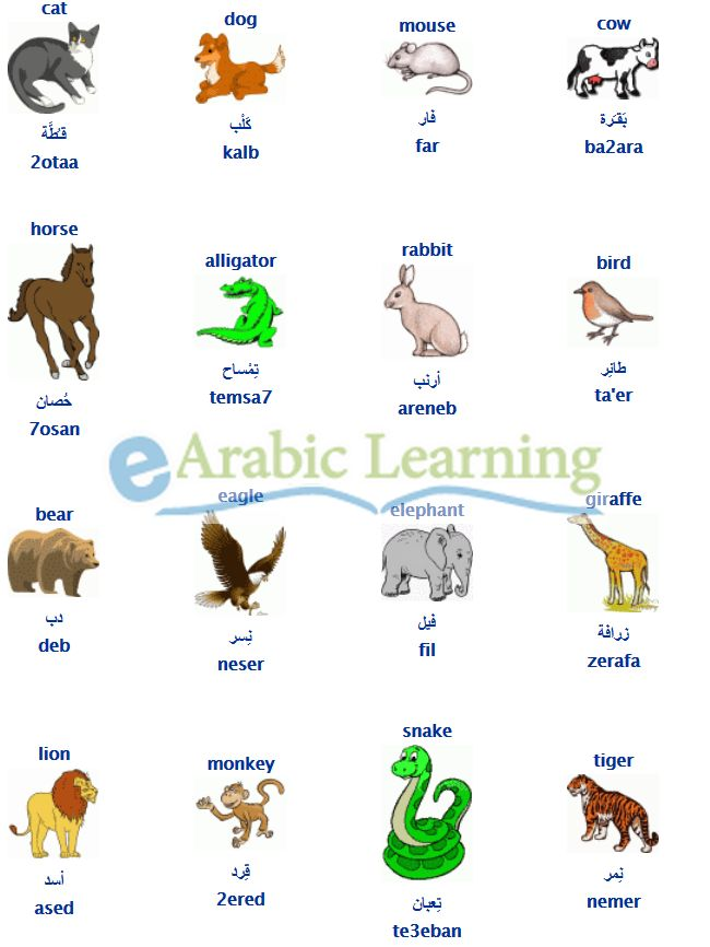 animals in egyptian arabic learn arabic egyptian dialect egyptian colloquial pinterest. Black Bedroom Furniture Sets. Home Design Ideas