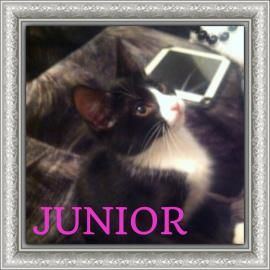 My name is Junior but don't let my name fool you, I am a sweet little 5 month old princess. Yup, I'm a girl through and through. I love to be held, and curl up in nice warm spaces. I am spayed, microchipped and vaccinated. Visit www.cawsab.org to fill out an application for me today!