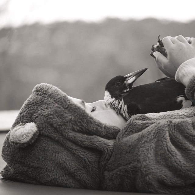 16 Photos Of The Magpie That Shares An Unlikely Bond With Her Humans   Penguin The Magpie 1