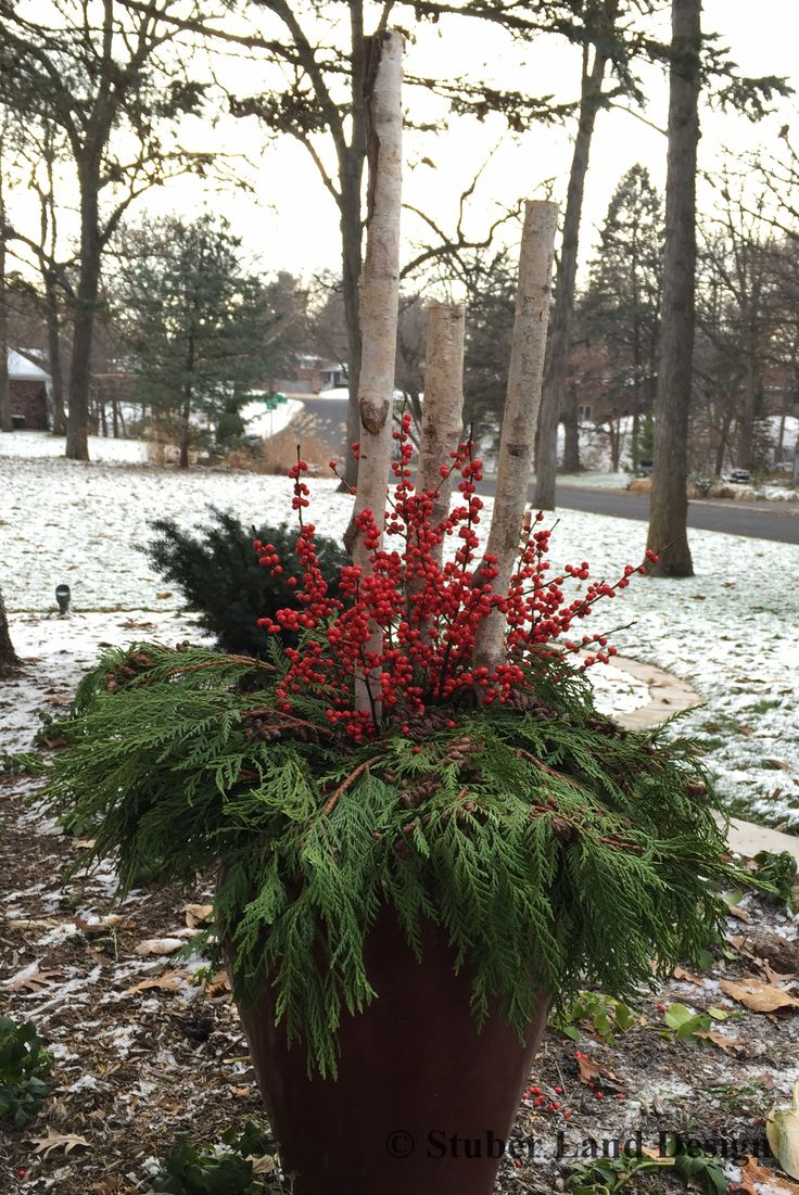 27 best winter container gardening images on pinterest winter