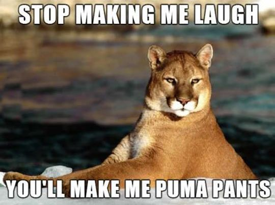 Sarcastic puma // funny pictures - funny photos - funny images - funny pics - funny quotes - #lol #humor #funnypictures
