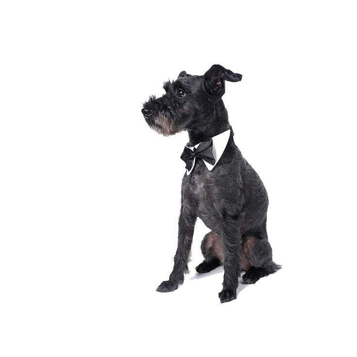 Verstellbare Krawatte Fur Katzen Und Kleine Oder Mittelgrosse Hunde In 2020 Mittelgrosse Hunde Kleine Hunde Haustier