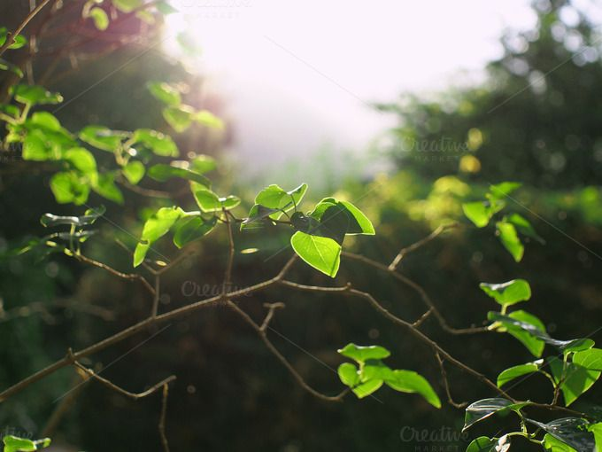 Green branch in summer forest by Life Morning Photography on Creative Market