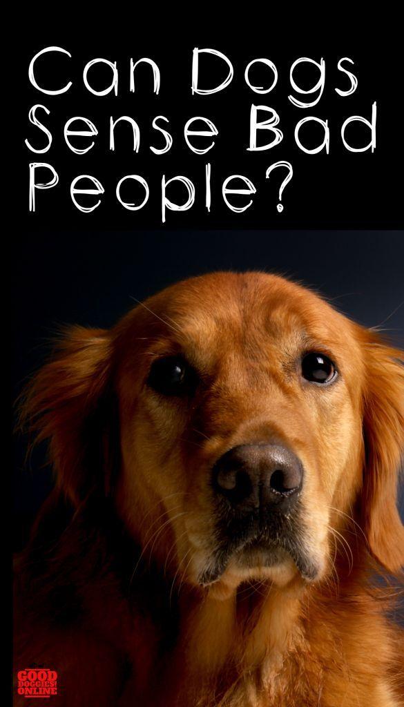 Can Dog Sense Bad People Dogs Behavior Guide Dogs Basic Dog