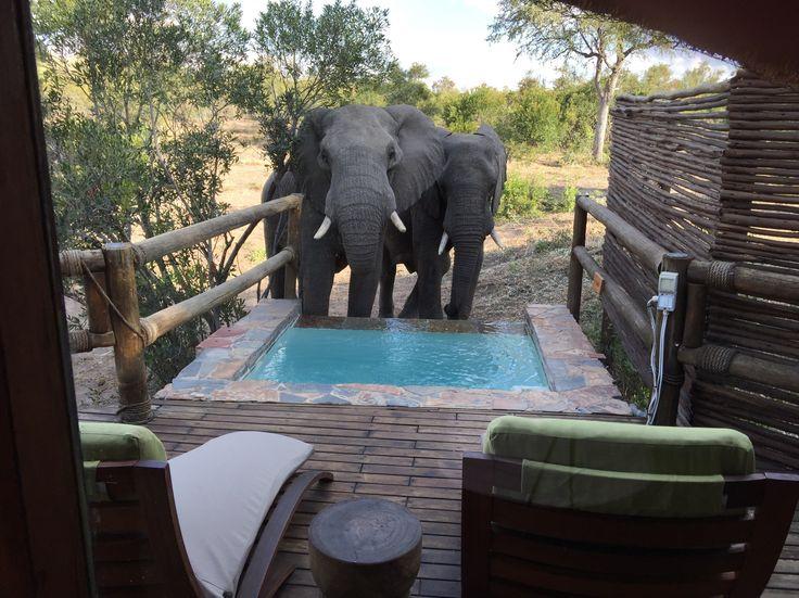 Elephants taking a drink in my splash pool.