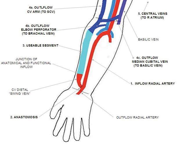116 best my career <3 images on pinterest | medicine, nursing, Human Body